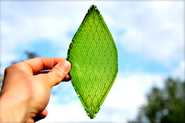 Artificial Leaf - The next big thing in the fight against climate change