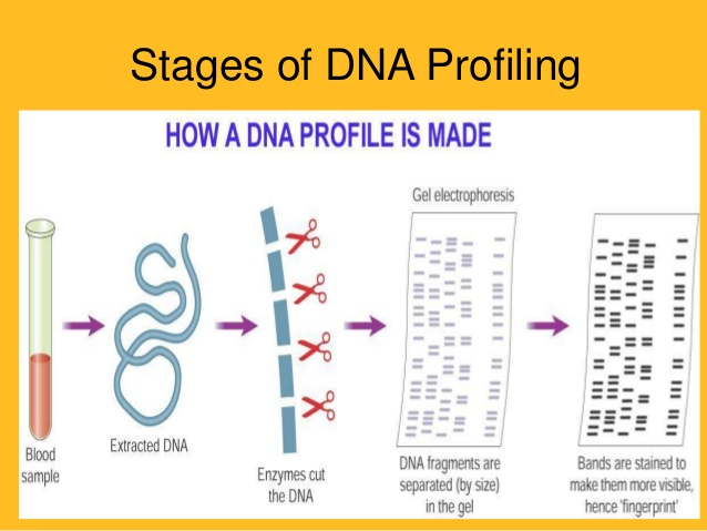 """DNA Profiling"" and ""DNA Technology Bill 2018"" upsc ias essay"
