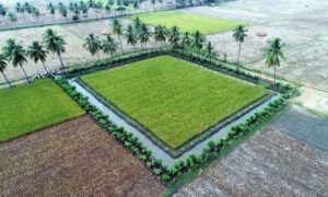 [Updated] Zero Budget Natural Farming - The Key to Sustainable Agriculture