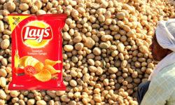 PepsiCo Vs Potato Farmers Case - Protecting Seed Sovereignty