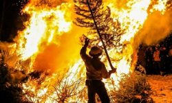 Australian Bushfire Crisis - All You Need to Know