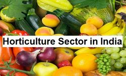 Horticulture Sector in India - Current Status, Challenges, Initiatives