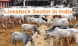 Livestock Sector in India - Current Status, Challenges & Initiatives