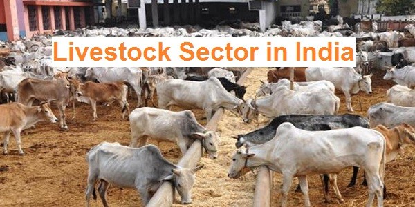 Livestock Sector in India – Current Status, Challenges & InitiativesPREMIUM