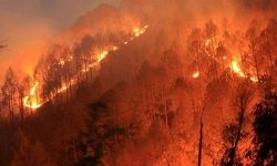 [Disaster Series] Forest Fires in India and its Management