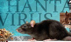 Hantavirus - Is it a new global pandemic?
