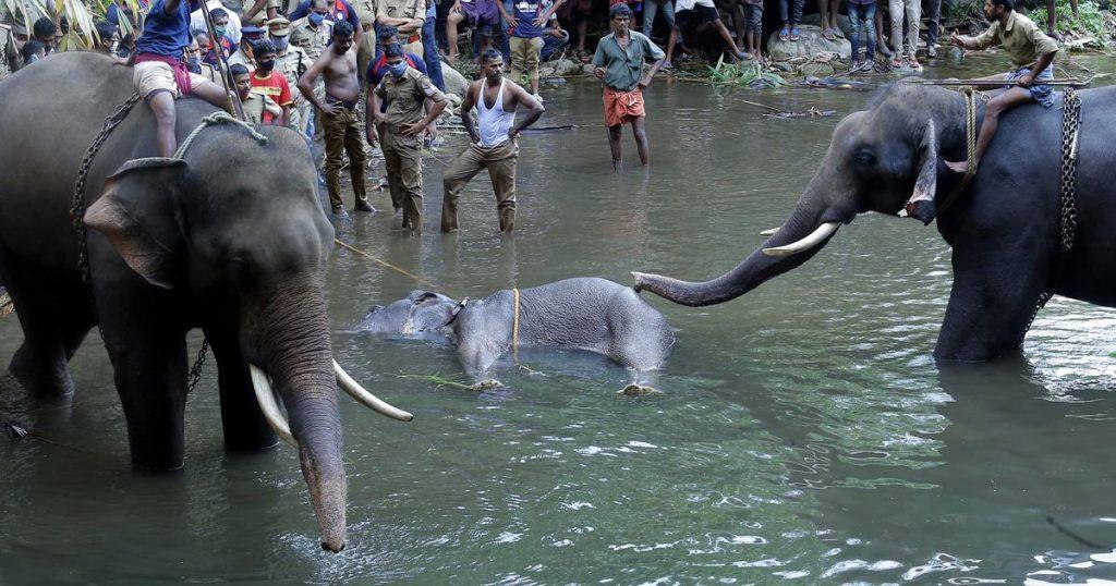 animal cruelty upsc