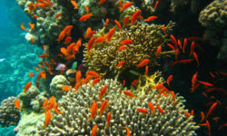 Coral Ecosystem in India: Importance, Distribution, threats, Way Forward
