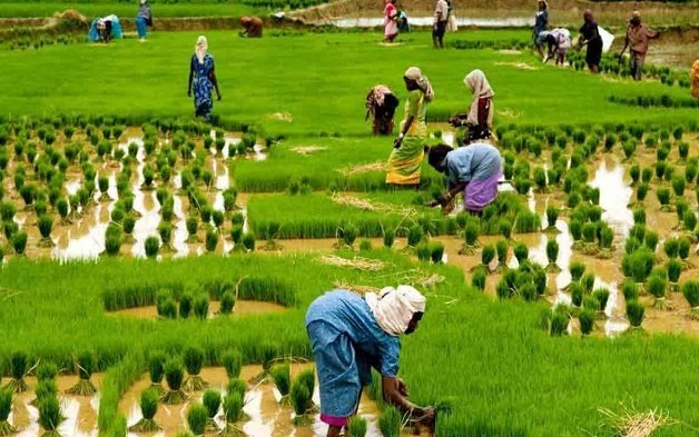 Feminisation of Agriculture - Challenges and Way Ahead