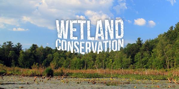 Wetland-Conservation-upsc