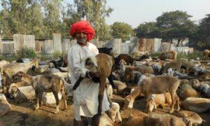 [Editorial] Pastoralism in Agrarian Development