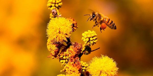 [Editorial] Post-2020 Global Biodiversity Framework